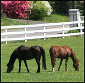 Cumming GA Equestrian Properties and horse farms for sale